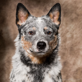 Is It Ok To Breed Father And Daughter Dogs